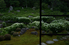 両足院,半夏生(PK3_9292,28mm,F3.2,FULL)2014yaotomi_.jpg