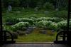 両足院,半夏生(PK3_9298,35mm,F3.2,FULL)2014yaotomi_.jpg