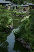 両足院,半夏生(PK3_9328,35mm,F2.8,FULL)2014yaotomi_.jpg
