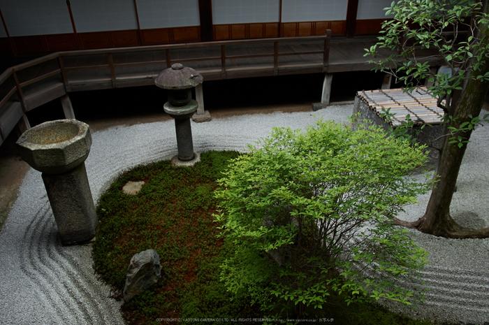 両足院,半夏生(PK3_9383,18mm,F2.8)2014yaotomi_.jpg