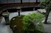 両足院,半夏生(PK3_9383,18mm,F2.8,FULL)2014yaotomi_.jpg