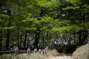 大台ケ原,新緑(5J7C0079,74mm,F4)2014yaotomi_.jpg