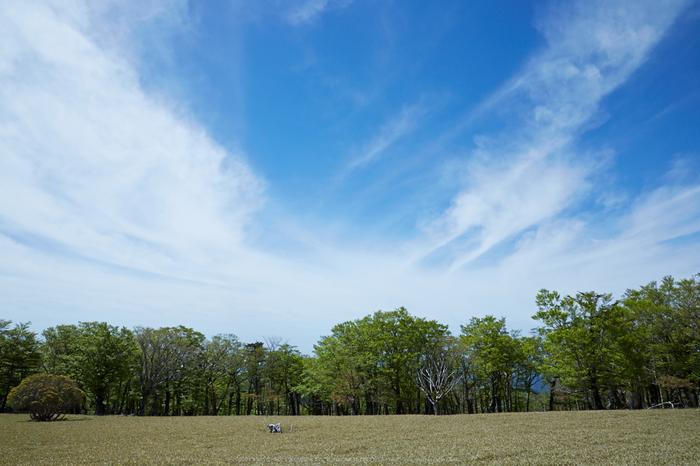 大台ケ原,新緑(5J7C0080,24mm,F8)2014yaotomi_.jpg