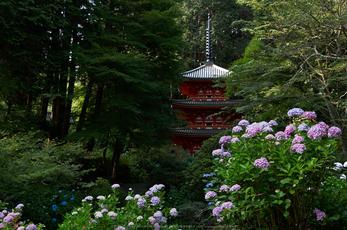 岩船寺,アジサイ(PK3_9551,31mm,F8)2014yaotomi_.jpg