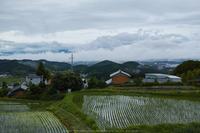 御所葛城,6月(SDIM0021,F5.6)2014yaotomi_.jpg