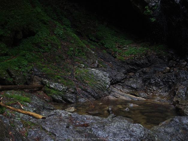 御船の滝,こあじさい(IMGP0247,55mm,F2.8)2014yaotomi_.jpg
