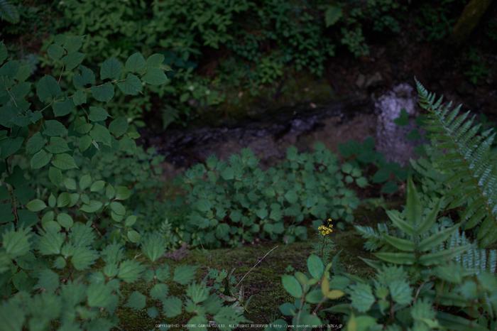 東吉野,6月(DSCF6255,35mm,F2.2)2014yaotomi_.jpg