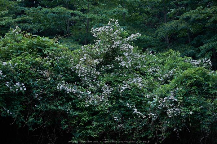東吉野,6月(DSCF6260,35mm,F2)2014yaotomi_.jpg