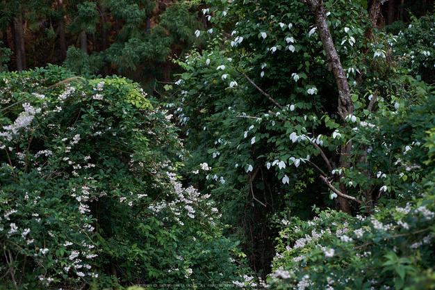 東吉野,6月(DSCF6263,35mm,F2)2014yaotomi_.jpg