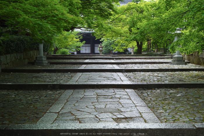 真如堂,新緑(SDIM0168,35mm,F3.2)2014yaotomi_.jpg