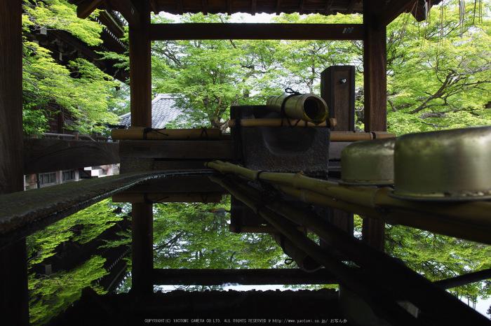 真如堂,新緑(SDIM0202,18mm,F11)2014yaotomi_.jpg