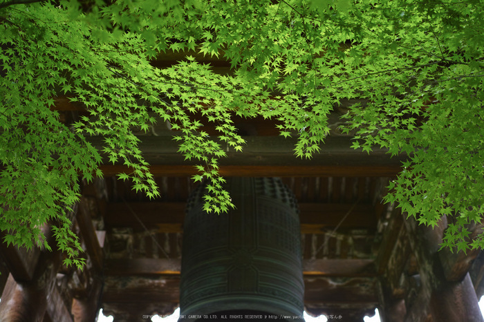 真如堂,新緑(SDIM0214,35mm,F1.8)2014yaotomi_.jpg