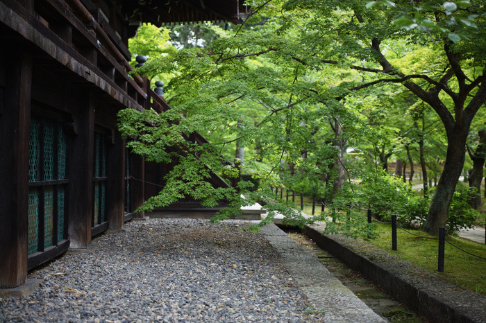 真如堂,新緑(SDIM0218,35mm,F1.8)2014yaotomi_.jpg