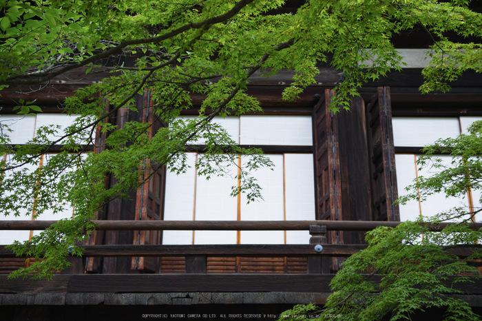 真如堂,新緑(SDIM0228,--mm,F--)2014yaotomi_.jpg
