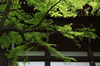 真如堂,新緑(SDIM0237,31mm,F6.3,FULL)2014yaotomi_.jpg