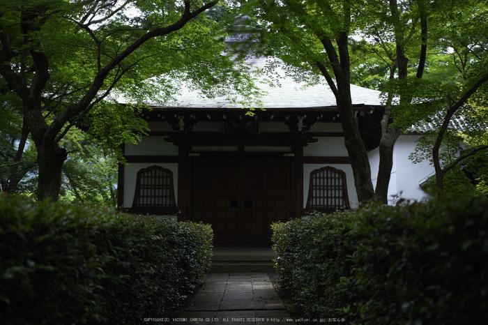 真如堂,新緑(SDIM0239,--mm,F--)2014yaotomi_.jpg