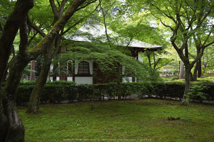 真如堂,新緑(SDIM0242,26mm,F2.2)2014yaotomi_.jpg