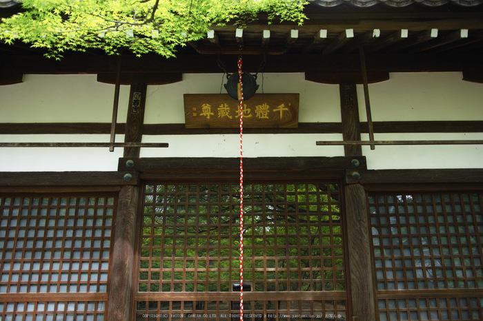 真如堂,新緑(SDIM0248,21mm,F2)2014yaotomi_.jpg