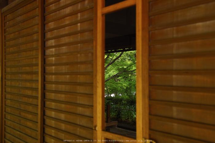 真如堂,新緑(SDIM0255,28mm,F3.5)2014yaotomi_.jpg