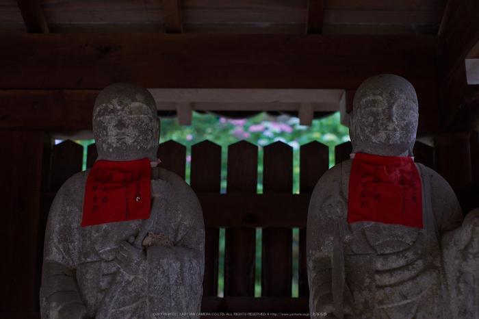矢田寺,あじさい(DSCF6370,35mm,F2.5)2014yaotomi_.jpg
