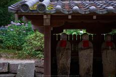 矢田寺,あじさい(DSCF6371,35mm,F1.6)2014yaotomi_.jpg
