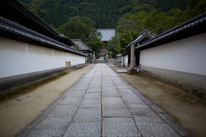 矢田寺,紫陽花(5J7C0671,F1.4)2014yaotomi_.jpg