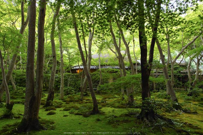 祇王寺,新緑(SDIM0475,18mm,F3.5)2014yaotomi_.jpg