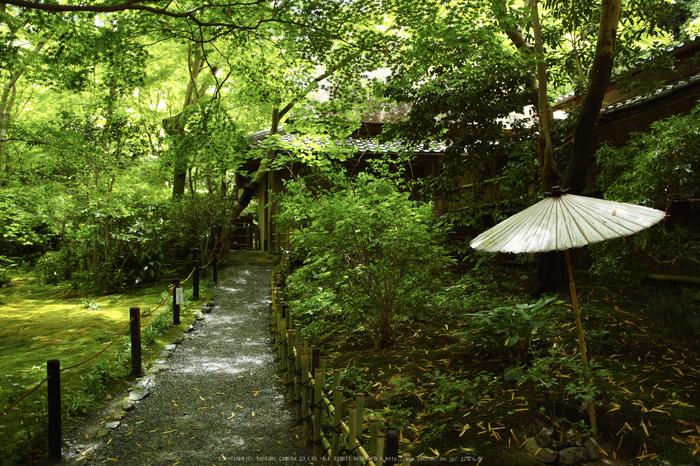 祇王寺,新緑(SDIM0489,20mm,F2)2014yaotomi_.jpg