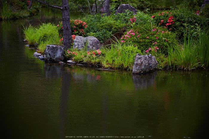 等持院,さつき(5J7C0548,105mm,F4)2014yaotomi_.jpg
