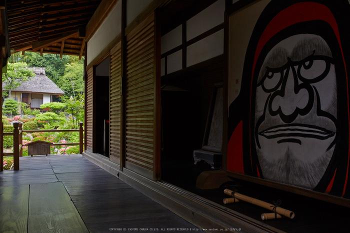 等持院,さつき(5J7C0620,35mm,F13)2014yaotomi_.jpg