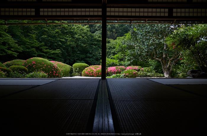 詩仙堂,さつき(5J7C0222,24mm,F8)2014yaotomi_.jpg