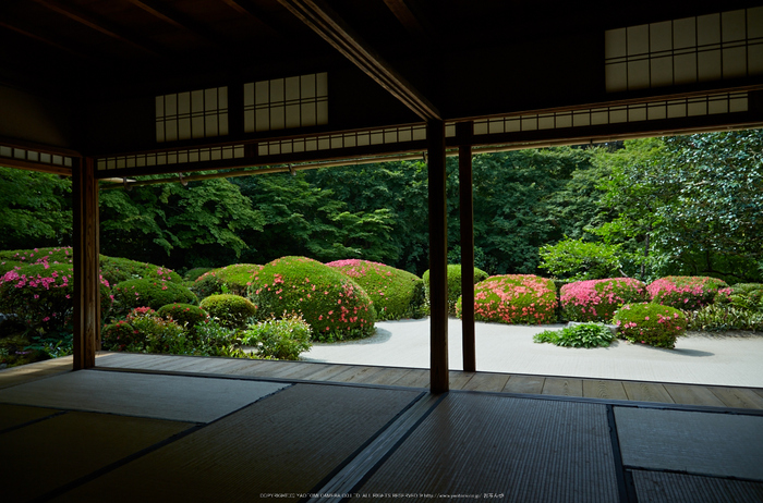 詩仙堂,さつき(5J7C0333,24mm,F4.5)2014yaotomi_.jpg
