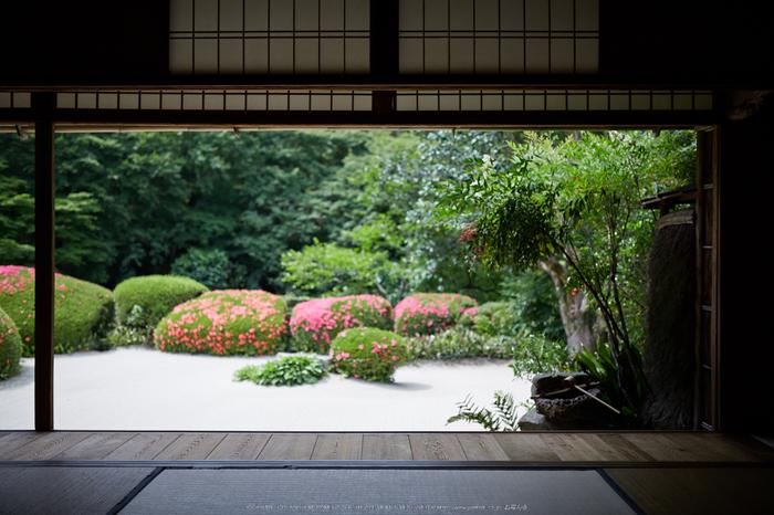 詩仙堂,さつき(5J7C0347,35mm,F1.6)2014yaotomi_.jpg