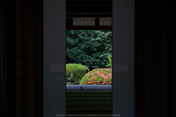 詩仙堂,さつき(5J7C0354,105mm,F4.5)2014yaotomi_.jpg