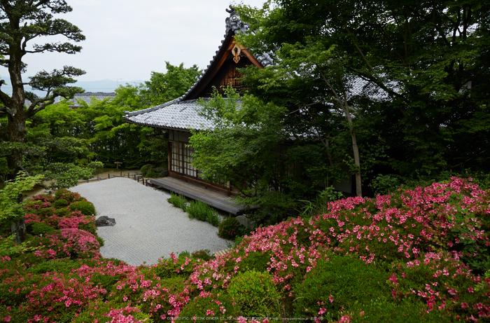 金福寺,さつき(5J7C0433,24mm,F7.1)2014yaotomi_ (1) .jpg