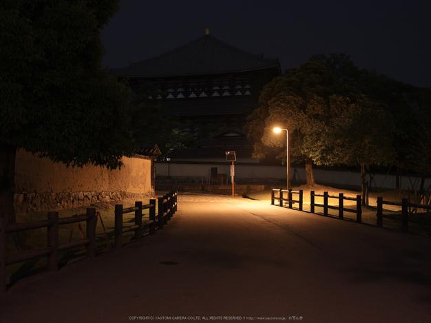 645Z(IMGP0083,55mm,F4.5,100)2014yaotomi_.jpg