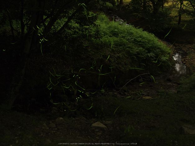 645Z(IMGP0086,55mm,F5,400)2014yaotomi_.jpg