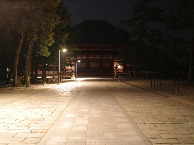645Z(IMGP0111,55mm,F4,100)2014yaotomi_.jpg