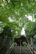柳谷観音,あじさい(DSCF6595,F5,XT1,FULL)2014yaotomi_.jpg