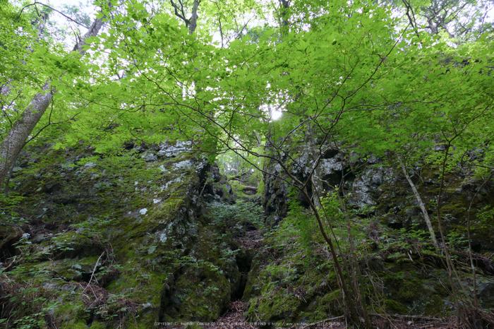 玉置神社,茅の輪(FZ1000,P1000317_F4_9.12mm)2014yaotomi_.jpg
