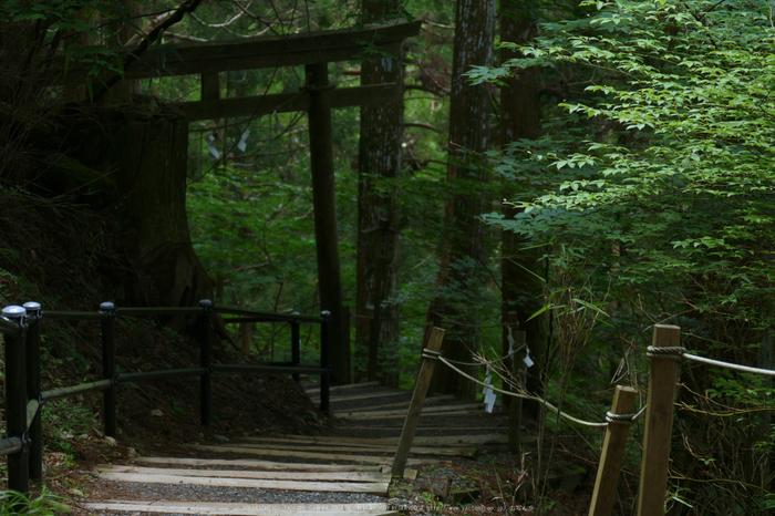 玉置神社,茅の輪(FZ1000,P1000323_F3.9_50.69mm)2014yaotomi_.jpg