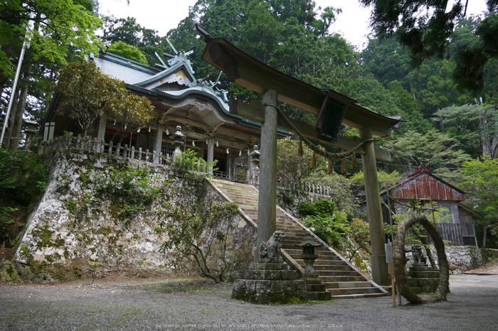 玉置神社,茅の輪(FZ1000,P1000358_F4_9.12mm)2014yaotomi_.jpg