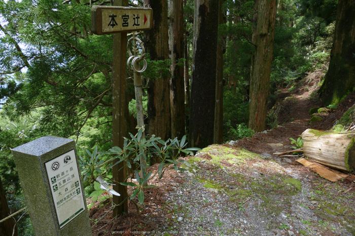 玉置神社,茅の輪(FZ1000,P1000383_F4.5_9.12mm)2014yaotomi_.jpg