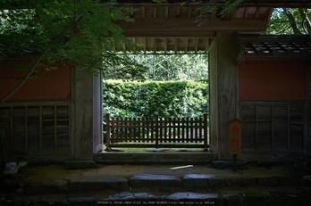 金剛輪寺,あじさい(DSCF6732,F2.8,XT1)2014yaotomi_.jpg