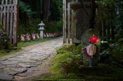 金剛輪寺,あじさい(DSCF6736,F2.8,XT1)2014yaotomi_ps.jpg