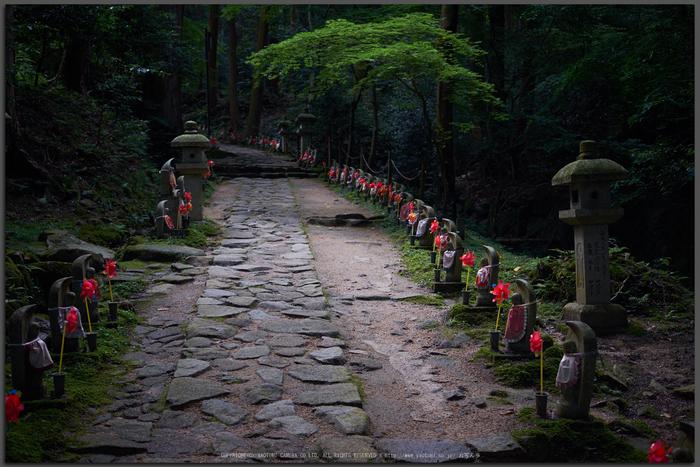 金剛輪寺,あじさい(DSCF6781,F2.8,XT1)2014yaotomi_Top.jpg