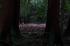 金剛輪寺,あじさい(DSCF6805,F5,XT1,FULL)2014yaotomi_.jpg