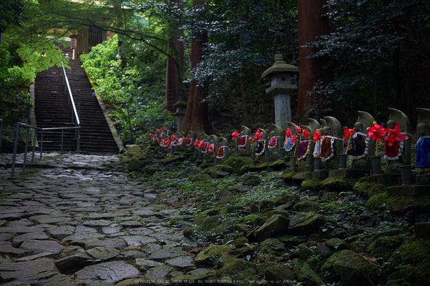 金剛輪寺,あじさい(DSCF6827,F2.8,XT1)2014yaotomi_.jpg
