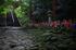 金剛輪寺,あじさい(DSCF6827,F2.8,XT1,FULL)2014yaotomi_.jpg
