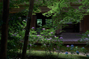 金剛輪寺,あじさい(DSCF6860,F4.5,XT1,FULL)2014yaotomi_.jpg